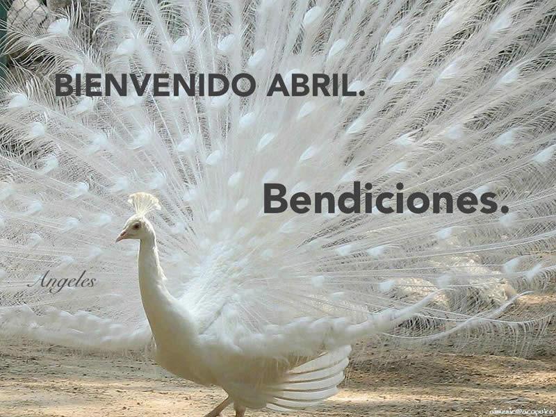 Bienvenido Abril, Bendiciones