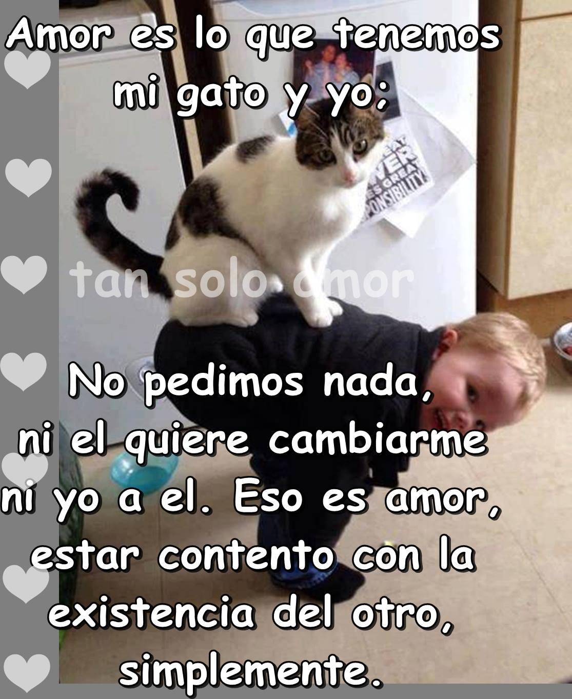 Amor es lo que tenemos mi gato y yo...