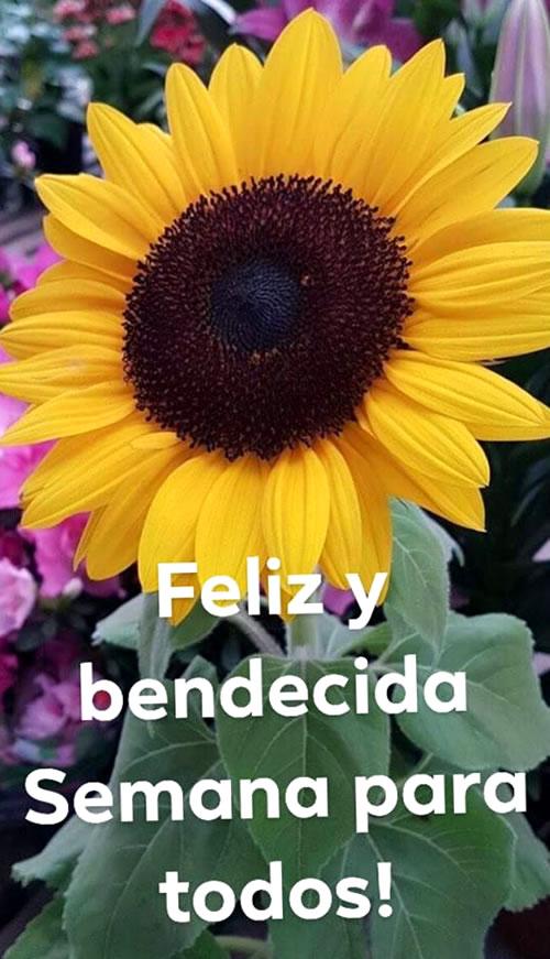 Feliz y bendecida semana para...