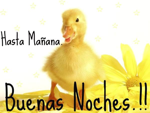 Hasta Mañana, Buenas Noches!!