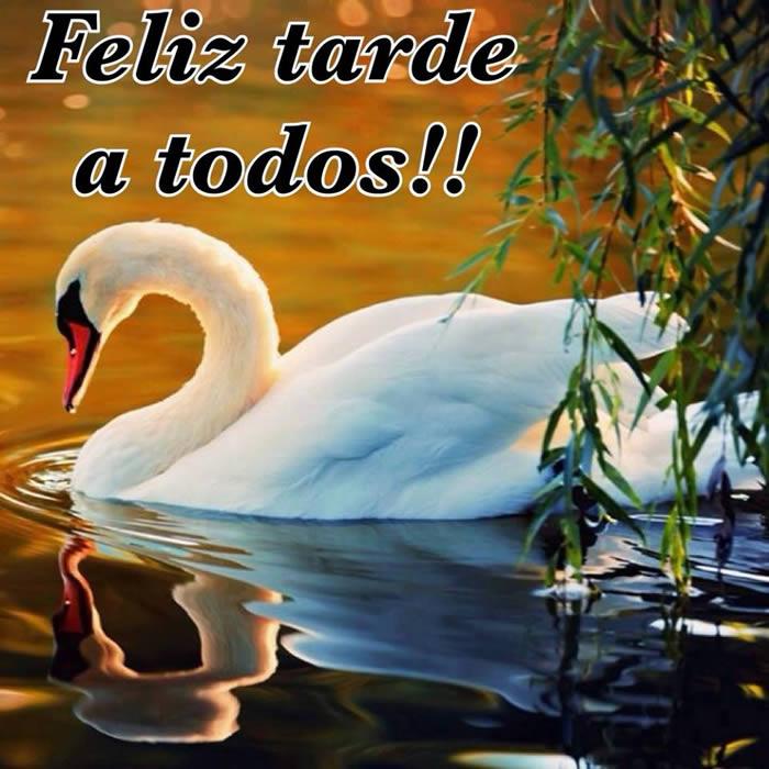 Feliz tarde a todos!