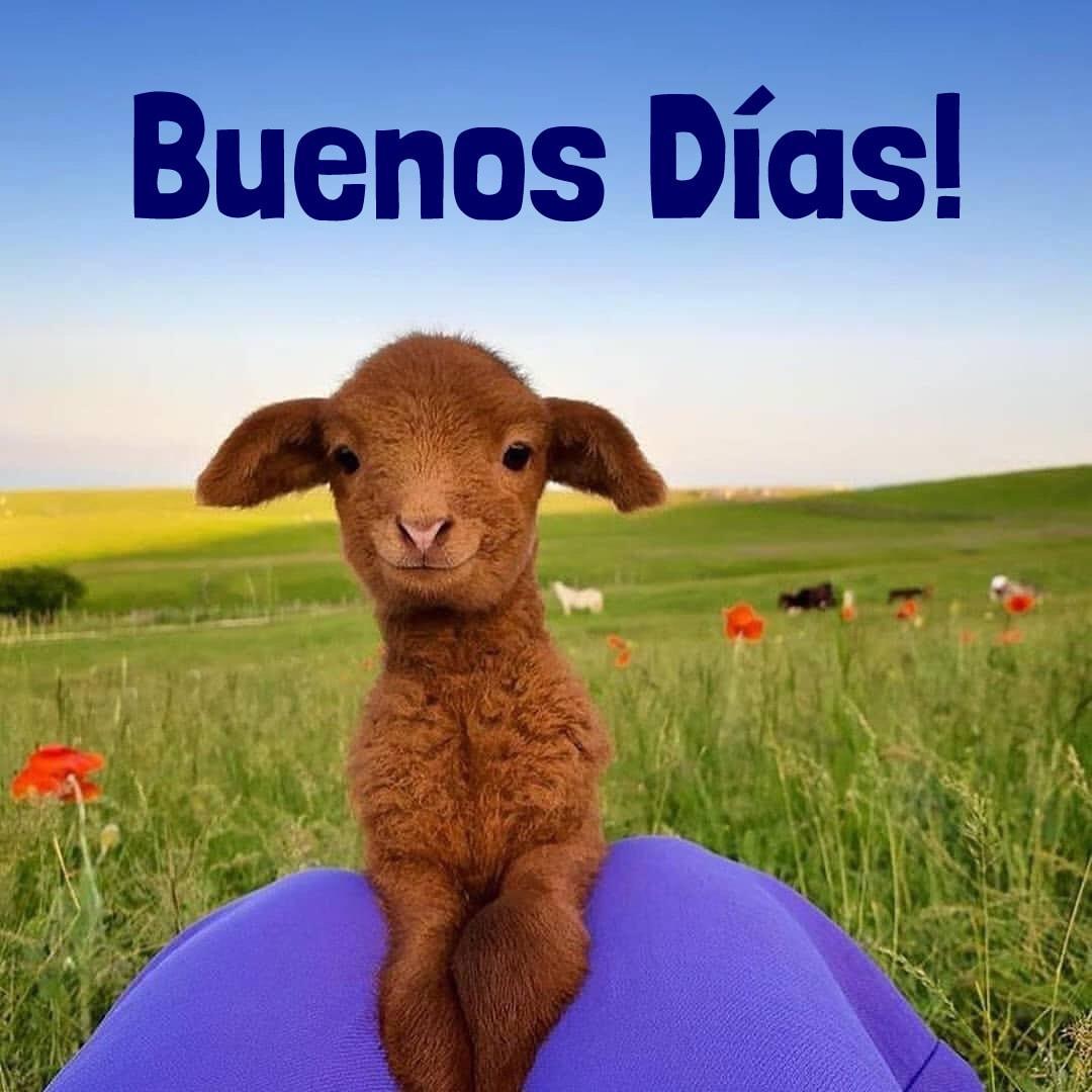Buenos días! La ovejita...