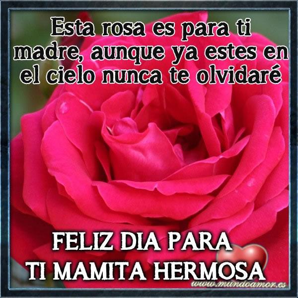 Esta rosa es para ti madre, aunque ya estes en el cielo nunca te olvidaré