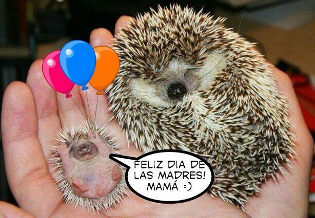 Feliz Día de las Madre Mamá :)