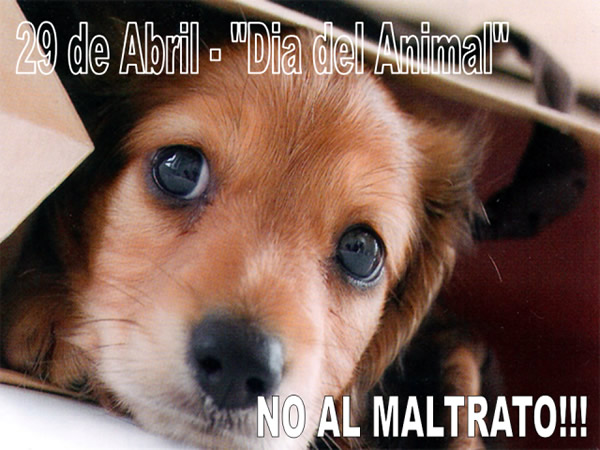 29 de abril - Día del Animal. No Al...