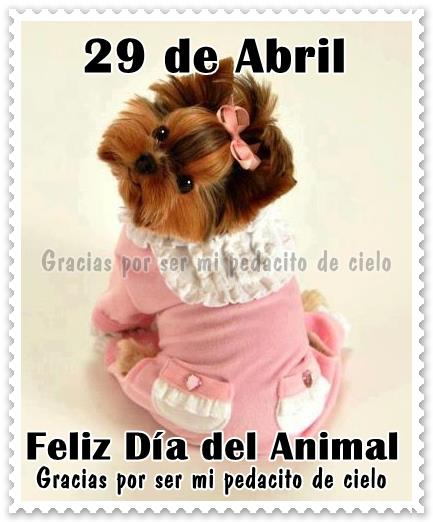 29 de Abril, Feliz Día del Animal...