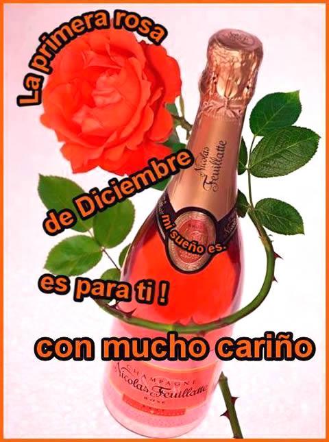 ¡La primera rosa de Diciembre es para ti!