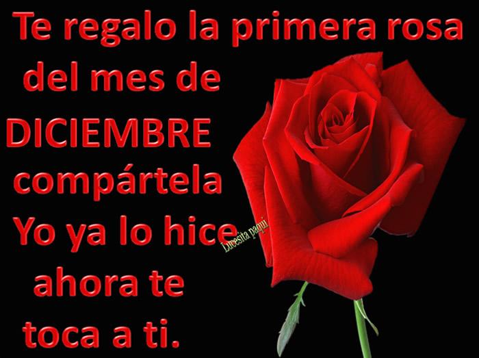 Te regalo la primera rosa del mes de Diciembre
