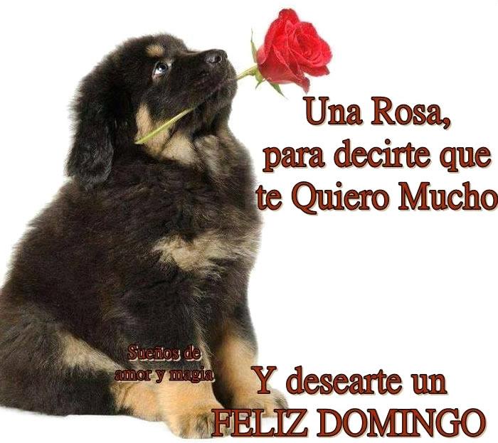 Una rosa, para decirte que te quiero mucho y desearte un Feliz Domingo