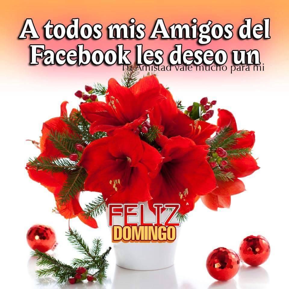 A todos mis Amigos del Facebook les deseo un Feliz Domingo