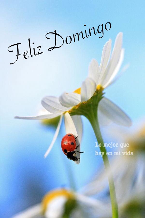 Feliz Domingo. - Página 13 Domingo_143