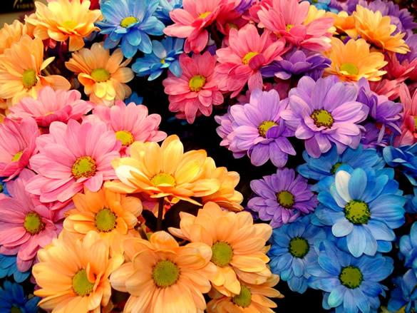 Papel tapiz de flores coloridas