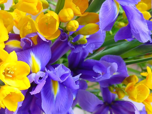 Hermosas flores moradas y amarillas