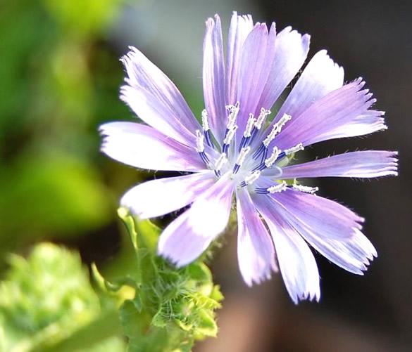 Bonita flor abierta con el sol