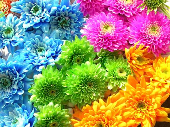 Fondo de pantalla de flores de colores brillantes