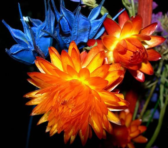 Flores naranja y flores azules