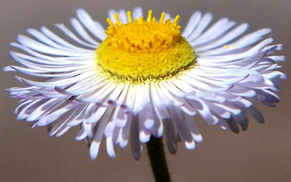 Flores imagen 9