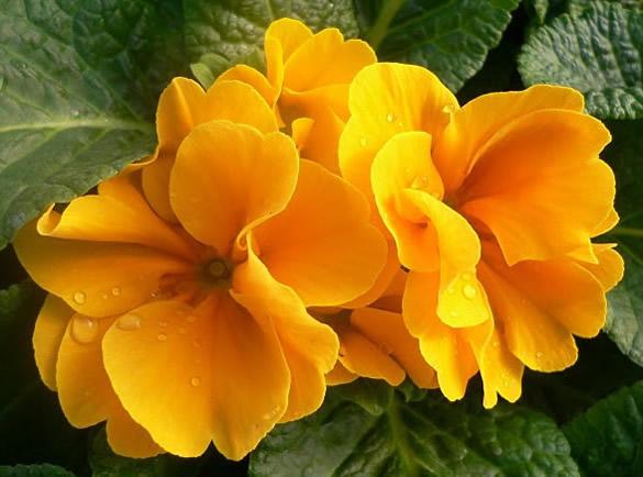 Flores amarillas en la naturaleza
