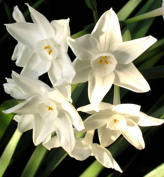 Bonitas flores blancas