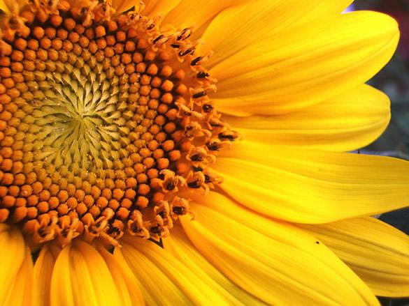 Asombrosa flor amarilla