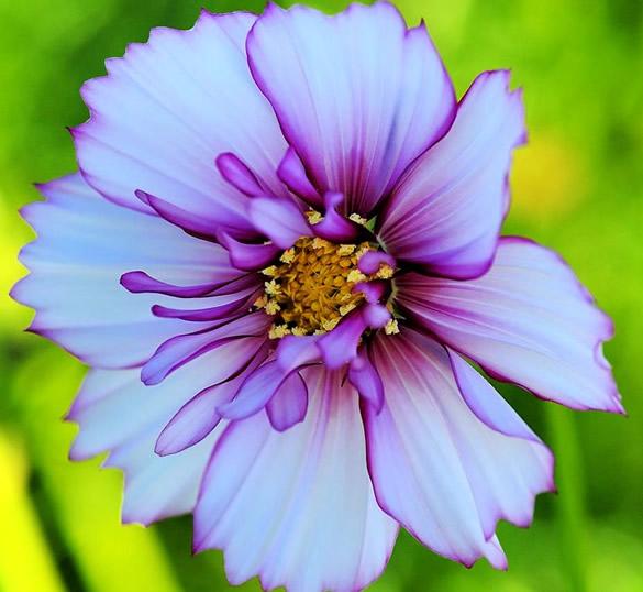 Sorprendente foto de flor lila