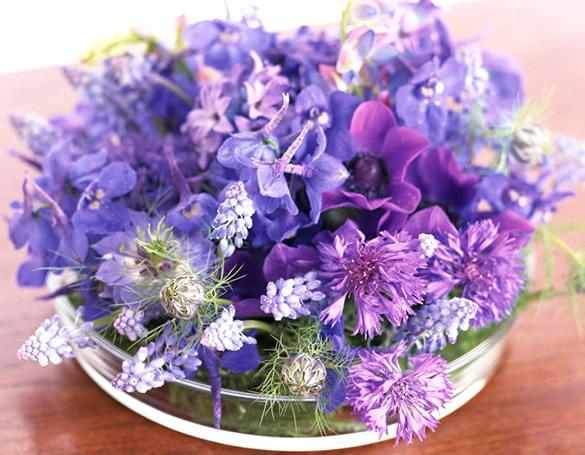Diferentes flores moradas