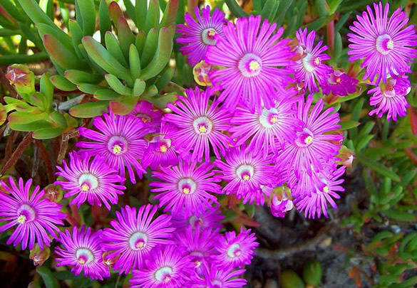 Pequeñas flores moradas