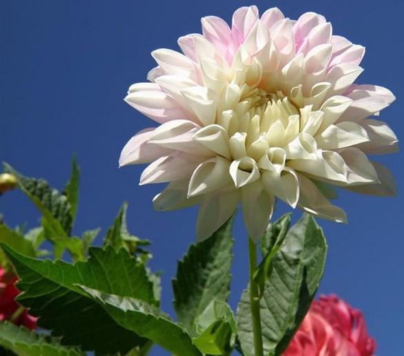 Preciosa flor blanca en el campo