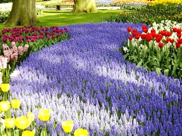 Hermoso jardín con tulipanes