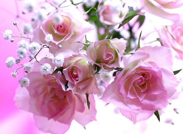 Botones de rosa abriendo