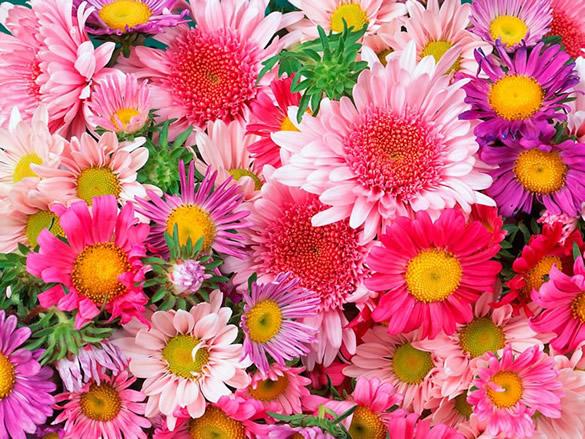 Cuadro de flores rosas