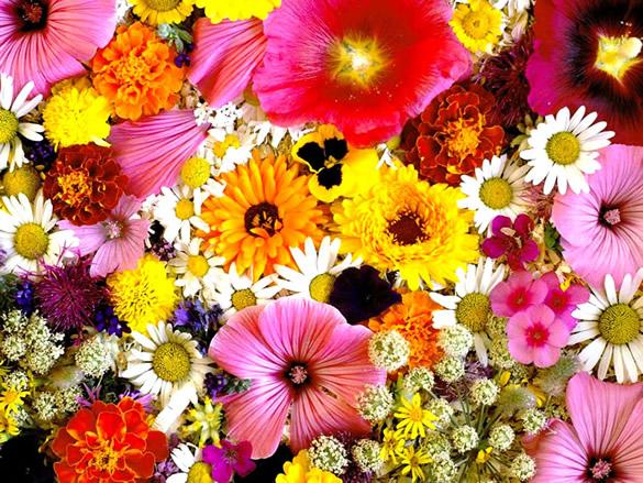 Cuadro de flores en todos tamaños