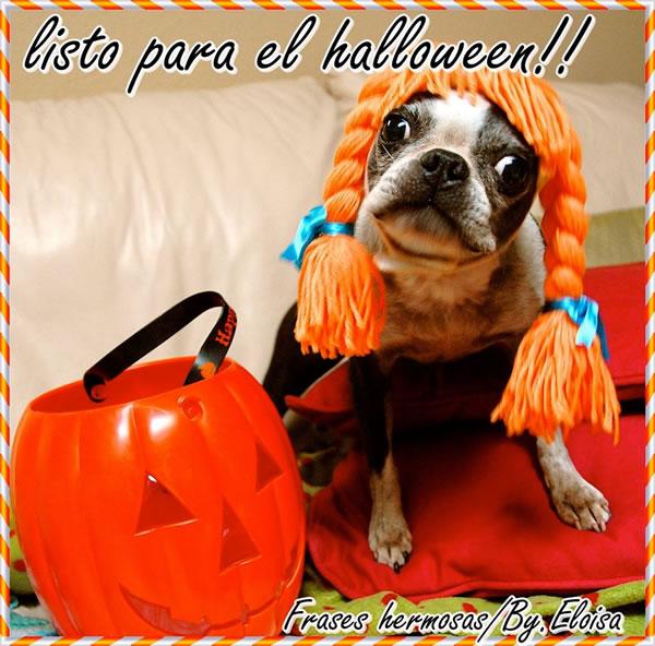 Listo para el halloween!!