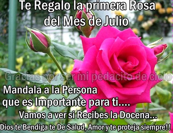 Te Regalo la primera Rosa del Mes de...