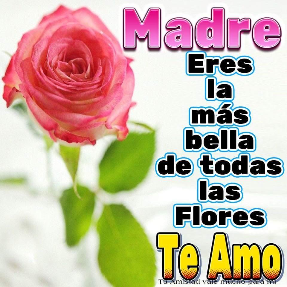 Madre, eres la más bella de todas las flores. Te Amo