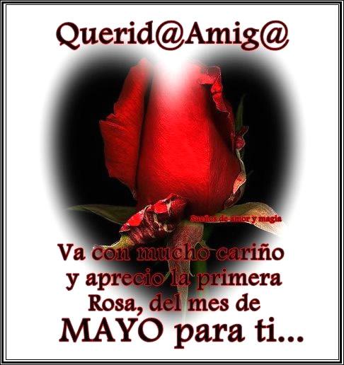 Querid@ Amig@ va con mucho cariño y aprecio la primera Rosa, del mes de Mayo para ti...