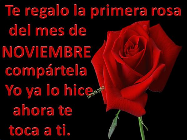 Te regalo la primera rosa de mes de Noviembre