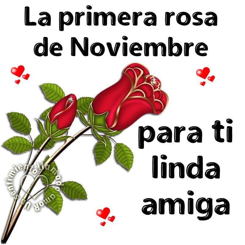 La primera rosa de Noviembre