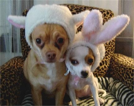 Perros sentados en un sillón con gorros y orejas de conejo