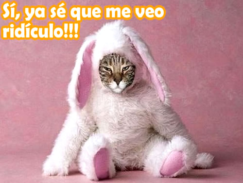 Gato en traje de conejo rosa sentado