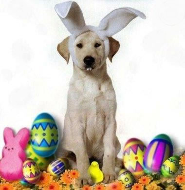 Perro sentado con orejas de conejo y dientes de conejo a su alrededor huevos de pascua