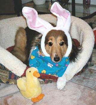 Perro acostado en su cama con orejas de...