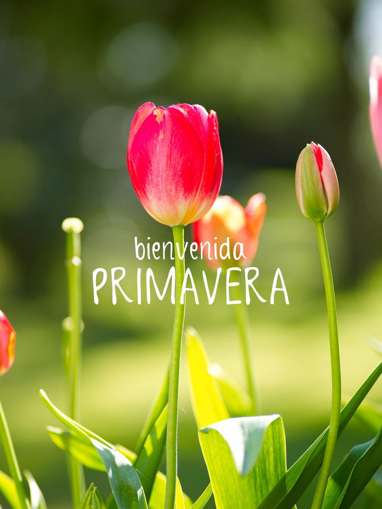 25 primavera im genes fotos y gifs para compartir for Fotos pinterest