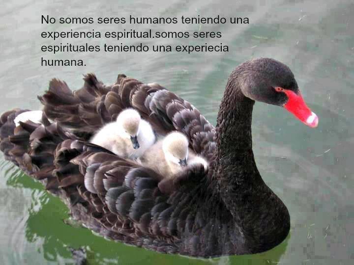 No somos seres humanos teniendo una experiencia espiritual...