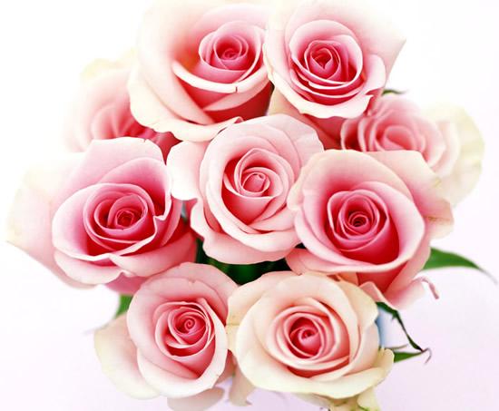 Ramo de rosas de color rosado