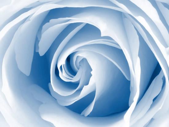 Rosas imagen 6