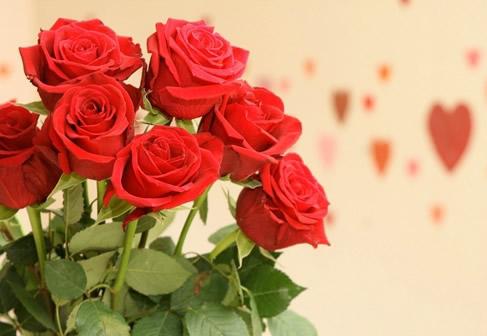 Rosas imagen 10