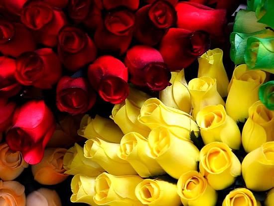Rosas amarillas, rosas rojas