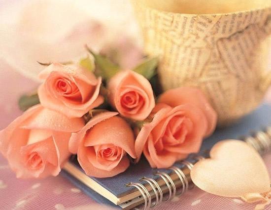 Bonita postal de rosas