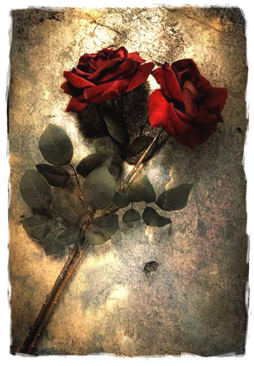 Bonito cuadro de rosas rojas